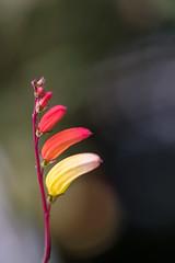 New Discovery (maxst001) Tags: 2018yip 3bezirk austria belvedere botanischergarten europa farben hortusbotanicusvindobonensis landstrase natur oesterreich pflanze spazieren staedteundplaetze vienna wien botanicalgarden nature rot