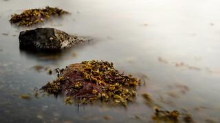 Algen auf Stein2