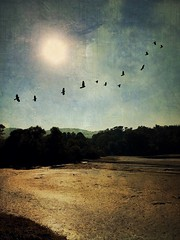 Low water at Beaver Lake. (jeanne.marie.) Tags: trees mountains textured sun sunshine flight flying birds iphone7plus iphoneography landscape lowwater autumn ashevillenc asheville beaverlake lake