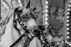 Sourires (smiles) (Larch) Tags: chevaldebois lampe lumière tête head enfance chidhood merrygoround oreille ear crinière mane samoëns hautesavoie france noiretblanc nb blackandwhite bw ravi delighted happy pleased merrygoroundhorses sourire smile