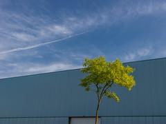 Minimalistic Composition in Blue and Green (ARTUS8) Tags: minimalismus flickr wolken baum nikon1635mmf40 nikond800 hausgebäude
