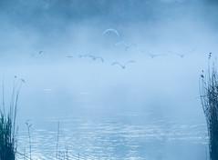 Misty Myall (Wanda Amos@Old Bar) Tags: wandaamos birds flying landsacpe minimalism minimalist mist morning spoonbills sunrise