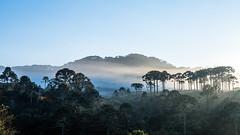 rio do rastro-18 (CARLOS_HP) Tags: amanhecer arvore alvorada araucarias blumas bomjardimdaserra neblina santacatarina silhueta