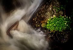 Ouzel Falls, Isolation, #2 (andertho) Tags: ouzel falls colorado nps national park rocky mountain olympus omd em1ii m43 microfourthirds