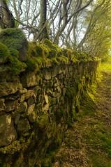 Sligo Countryside (rickybon) Tags: sligo country pentaxk5 pentaxflickraward pentaxart pentax k5 riccardobonelli