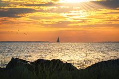 Sailing Under Sunrays (Mike Ver Sprill - Milky Way Mike) Tags: sailing sailboat sail boat ship seagulls sea gulls sunrays sun rays light seascape nature beautiful travel birds sunset sunrise sandy hook atlantic ocean bay highlands