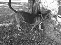 Christy May  (B&W) (neukomment) Tags: bw blackwhite parks michigan august 2018 summer dogs android