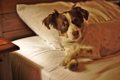 Tie me (R.D. Gallardo) Tags: tie me atame perro dog buru luna raw retrato canon eos 6d eos6d 50mm f14 noceda