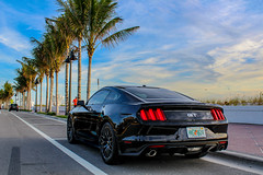 Stang on the beach (vinnypagphotography) Tags: mustang ford gt fortlauderdale