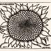 November Sunflower (1917) by JJulie de Graag (1877-1924). Original from the Rijks Museum. Digitally enhanced by rawpixel.