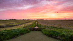 Sunset in Midden Delfland (FotoCorn) Tags: middendelfland sunset landscape sky nature summer sun evening clouds scenic colorful scenery rural countryside