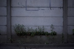 DSC_5038 (satooooone) Tags: nikon d750 snap landscape 風景