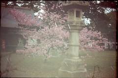 (✞bens▲n) Tags: pentax lx velvia 100f carl zeiss 35mm f24 flektogon multiexposure japan nagano cherry blossoms sakura shrine stars analog film slide
