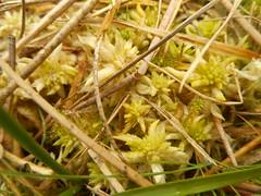 DSCN5692 (norwin_galdiar) Tags: bretagne brittany breizh finistere monts darrée nature landscape paysage
