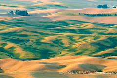 Steptoe Waves (Lidija Kamansky) Tags: pacificnorthwest palouse steptoebutte summer washingtonstate agriculture countryside farming farmland field golden landscape morning outdoors rollinghills rural rurallandscape ruralscene scenics sunrise