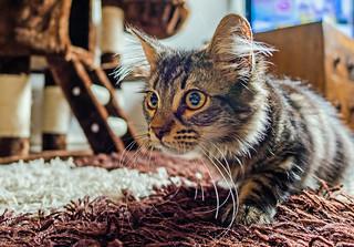 Kitten (Panasonic Lumix LX15 Compact) (1 of 1)