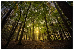Bingley St Ives (.Wadders) Tags: wood bingley stives yorkshire d600 nikonfxshowcase nikkor1635mmf4