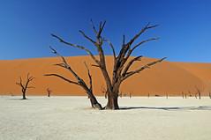 Deadvlei - Namibia (BayaBxl) Tags: namibie namibia deadvlei dunes acacia desert namib sable sand