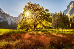 Cook's Meadow Summer Sunrise (optimalfocusphotography) Tags: sunburst usa sunrise yosemitenationalpark nationalpark yosemitenp northerncalifornia sun summer tree backlight sky halfdome california landscape yosemite nature sierranevada