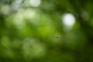 Hoverbug