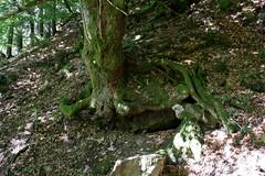 Wortels. (limburgs_heksje) Tags: duitsland deutschland germany zwartewoud schwarzwald black forest wehra wehratal