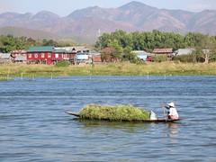 Inle Lake (D-Stanley) Tags: inlelake myanmar burma