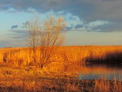 Рыжая осень / Red autumn (Владимир-61) Tags: закат осень ноябрь небо облака берег дон don shore cloud november autumn sunset nikon coolpix p600 natureinfocusgroup
