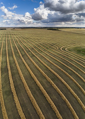 Harvest Patterns (Terry L Richmond) Tags: sitting field agriculture grass crop landscape soil farm sky outdoor desktop noperson clouds nature cloudy grassfamily cropland cloud train prairie ruralarea plain large guidance outdoors sand pattern line green texture grassland grassy ground country ecoregion growth horizon rural group road harvest commodity blue desert canada alberta