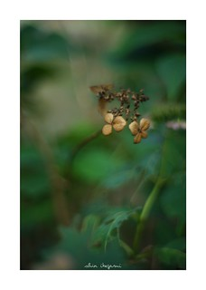 2018/8/24 - 10/12 photo by shin ikegami. - SONY ILCE‑7M2 / New Jupiter 3+ 1.5/50 L39/M
