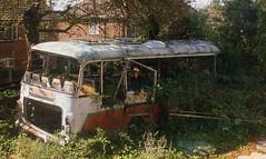 Seen better days (Chris Baines) Tags: ex mulleys suffolk yard bedford sb5 plaxton