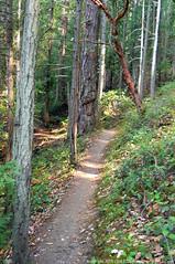 2018-08-18 Whistle Lake Trail 205 (09)  (680x1024) (-jon) Tags: anacortes skagitcounty skagit fidalgoisland sanjuanislands washingtonstate washington pnw pacificnorthwest salishsea pugetsound acfl anacortescommunityforestlands whistlelake lake trail path 205 nikon nikonl22 tree douglasfir fern alder summer woods forest a266122photographyproduction pacificmadrone arbutusmenziesii madrone arbutus hiking hike walk walking