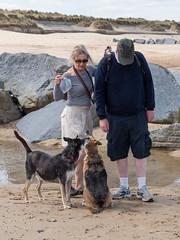 058-P1030843 LR (1gl) Tags: 2018 carpet carpets killer gumbo norfolk wintertononsea beach dogs coast