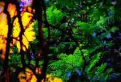 (FOTOS PARA PASAR EL RATO) Tags: cdmx jacarandas hojas amanecer arbol árboles arboles verde luz