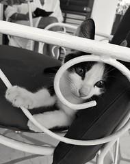 Maca (roksoslav) Tags: postira brač dalmatia croatia 2018 mačka maca kitty