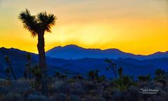 Joshua Tree National Park (Joe Marcone (3.1 Million+ Views)) Tags: joshuatreenationalpark california sunset joshuatree 1001nights