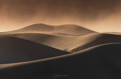"""Sheltered"" (Jennifer Renwick Nature Photography) Tags: deathvalleynationalpark mojavedesert aridclimate blowingsand california desert landscapephotography landscapes light mesquite mesquitedunes mesquitesanddunes nature ridges sand sanddunes sunset wind windysanddunes"