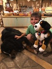 IMG959219 (Alpen Schatz - Mary Dawn DeBriae) Tags: happy customer alpenschatz bernesemountaindog dog swissdogcolar hunterswisscrosscollar doggles stein