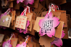 Sakura hues (EiaOlaf) Tags: flower temple tokyo japan written wishing