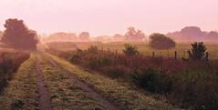 Midewin Mist (michellewendling907) Tags: mist morning midewin prairie country illinois