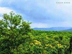 Green n greenery ✨🎆 #india #satpura #ranges #madhyapradesh #monsoon (gagan_bisen) Tags: satpura madhyapradesh monsoon ranges india pixel mountain