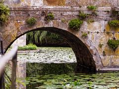 Under the Bridge (michaelmueller410) Tags: brücke graben moat bridge waterlily lilies stone arch bogen seerosen löhne owl ostwestfalen germany reflection spiegelung