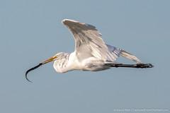 DSC_9362 (dwhart24) Tags: orlando wetlands park nikon d500 david hart nature animals 200500 tc 14