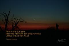 261/365 - Daily Haiku: Venus (James Milstid) Tags: dailyhaiku haikuaday haiku haiga poetry jemhaiku venus planet sunset