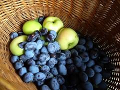 Obsternte (dorisgoebel) Tags: obst zwetschge plum fruit apfel apple
