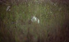 Hide and seek (Bauer Florian) Tags: fe 90mm f28 macro g oss sony ilce7rm2 hide seek cat wild summer