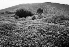 Views on Mt.Tarumae (threepinner) Tags: mttarumae chitose hokkaidou northernjapan japan mountainsnaps canon ftb nfd 28mm f28 kodak microfilm imagelink hq selfdeveloped 樽前山 千歳 北海道 北日本
