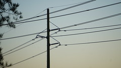Poles and wires (spelio) Tags: power cables network kv