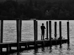 """Snapping Ducks"" (42jph) Tags: derwentwater keswick lake district cumbria uk england nikon d7200 water evening twilight black white bw mono"