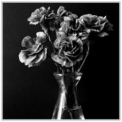 Flowers. Rolleicord V/Ilford HP5+. (Tony Joness) Tags: analogue analog bw bnw blackandwhite blackwhite develop developer dxophotolab dxo epson epsonscanner film fomafix germancamera hp5plus hp5 ilford ilfordhp5plus rodinal rollfilm scanner scan square tlr twinlensreflex v550 6x6 120 120filmcamera flowers stilllife