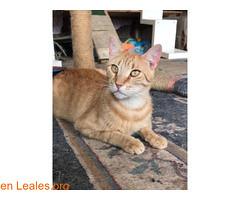 ELVIS BUSCA ADOPCION (Leales.org • tu guía animable) Tags: adopta adoptar adoptanocompres noalmaltratoanimal adopción sebusca extraviado perdido perro gatos lealesorg